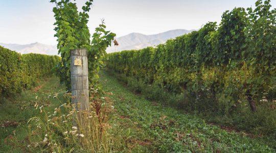 Stump Creek Vineyard image